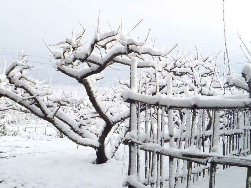初雪、そして積雪