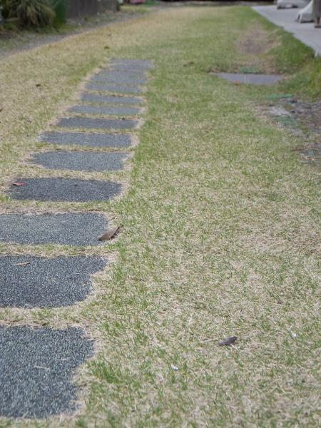 今日の我が家の芝生